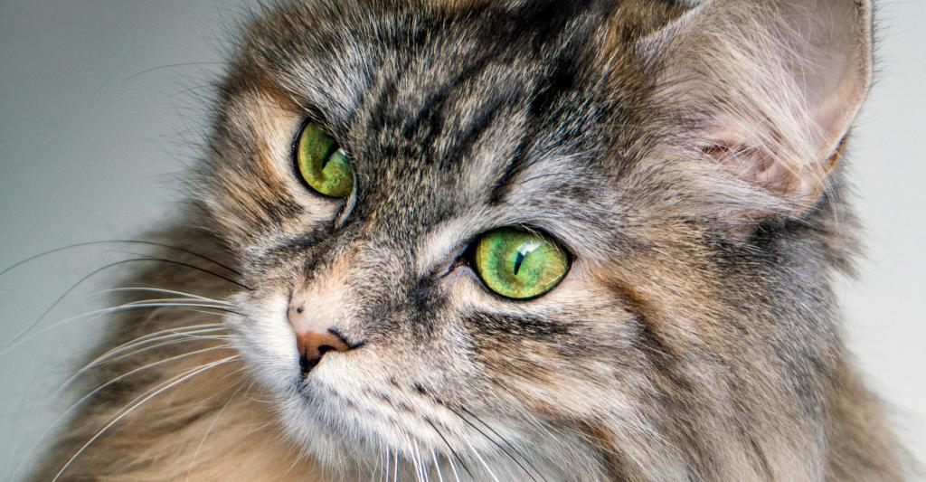 katten-oppas-cuijk-boxmeer