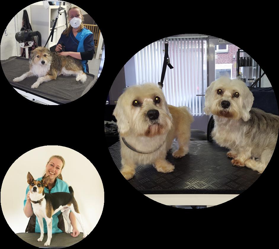 hondentrimsalon care for coat-hond, uden, halen, brengen, trimster, dierenartsassistente