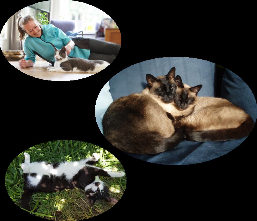 ingrid-cuijk-boxmeer-kattentrimsalon-kat-medischeverzorging-dierverzorgster-dierenartsassistente
