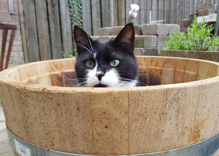 Kattentrimster cuijk nijmegen vacht kat trimsalon 5