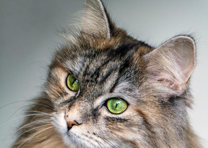 Kattentrimster cuijk nijmegen vacht kat trimsalon 7