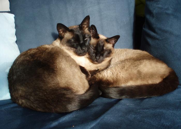 Kattentrimster cuijk nijmegen vacht kat trimsalon 9
